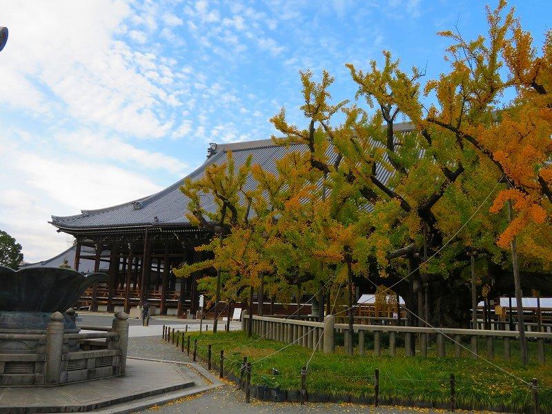西本願寺のイチョウ(市天然記念物)20191126_e0237645_17010440.jpg