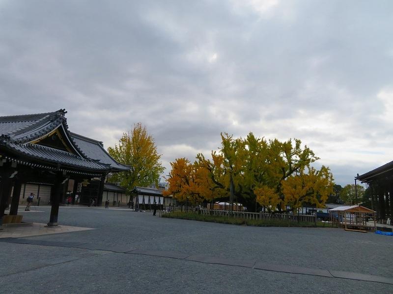 西本願寺のイチョウ(市天然記念物)20191126_e0237645_17010445.jpg