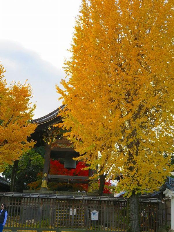 西本願寺「飛雲閣と鐘楼」20191126_e0237645_17063921.jpg