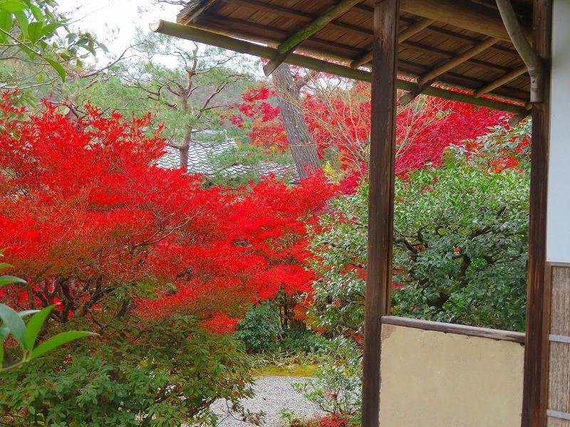 鷹峯「光悦寺庭園の紅葉」20191126_e0237645_17210173.jpg
