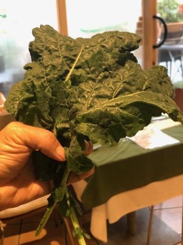 今朝も雨・・畑画像はお休みで収穫した野菜達をUP致します_c0222448_14491972.jpg
