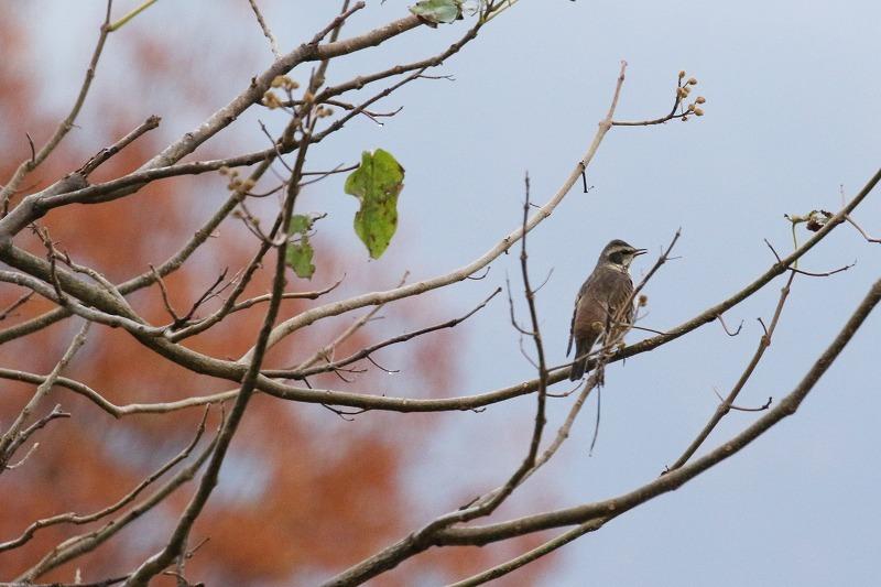 最近出会った鳥達_c0155950_21004244.jpg