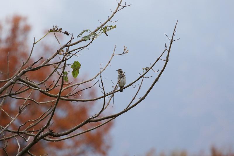 最近出会った鳥達_c0155950_21004879.jpg