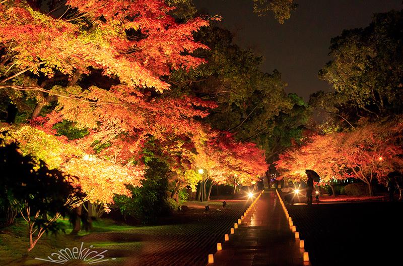 過年撮影の紅葉!(いずれも熊本地震前の撮影です。)_a0057752_09503126.jpg