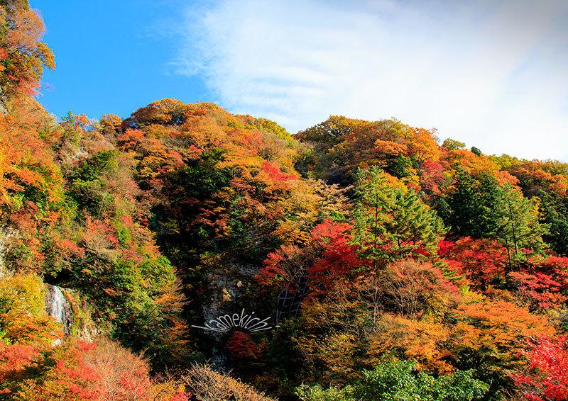 過年撮影の紅葉!(いずれも熊本地震前の撮影です。)_a0057752_09520408.jpg