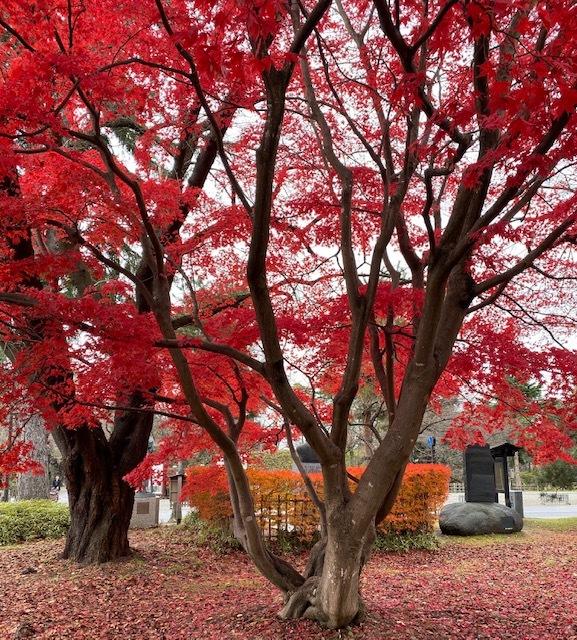 FUKUSHIMA@会津若松 美しい紅葉にサージュを思い出して_a0165160_21424485.jpg