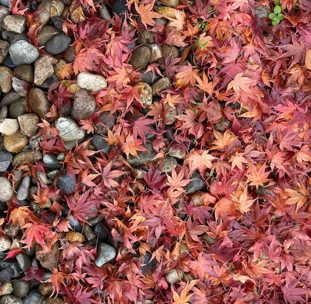 FUKUSHIMA@会津若松 美しい紅葉にサージュを思い出して_a0165160_21501486.jpg