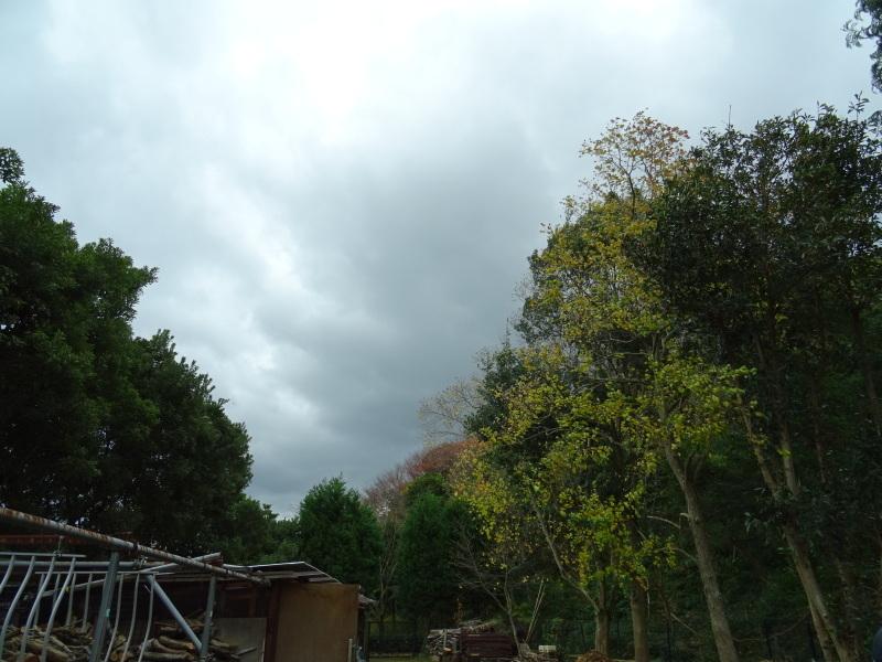 木枯らしが吹き荒れても 作業はする・・・うみべの森_c0108460_15000738.jpg