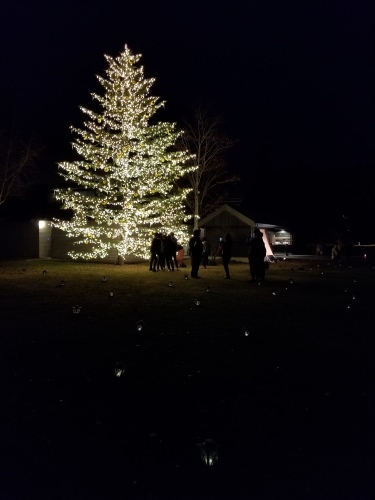 トンボの湯 * もみの木広場のクリスマスツリー★_f0236260_01122720.jpg