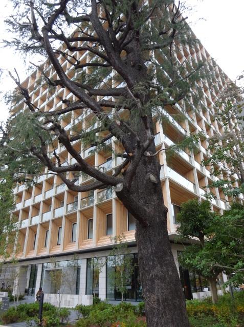 三井ガーデンホテル神宮外苑の杜プレミア (1)_b0405262_10485953.jpg