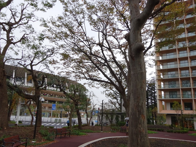 三井ガーデンホテル神宮外苑の杜プレミア (1)_b0405262_10594910.jpg