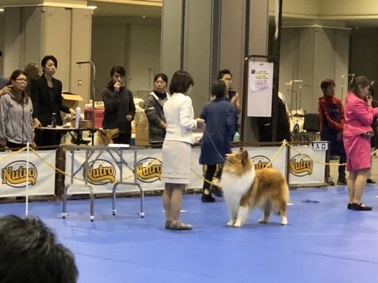 JKC大阪インター 単犬種部会展_f0126965_14202768.jpg