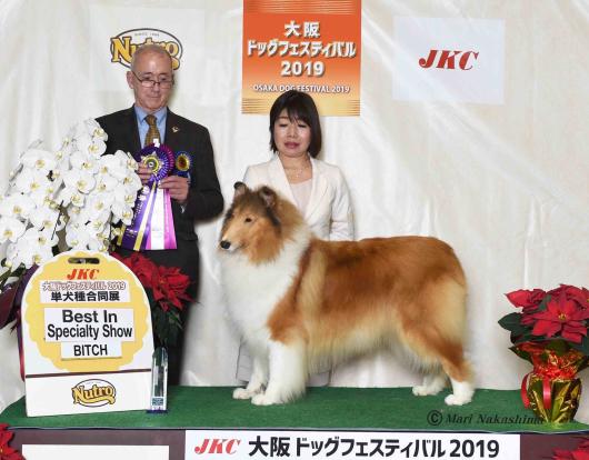 JKC大阪インター 単犬種部会展_f0126965_14202842.jpg