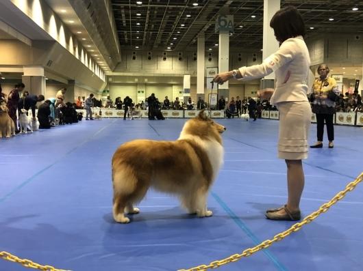 JKC大阪インター 単犬種部会展_f0126965_14202853.jpg