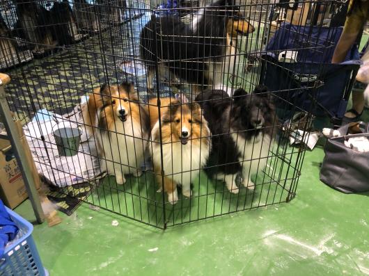 JKC大阪インター 単犬種部会展_f0126965_14203362.jpg