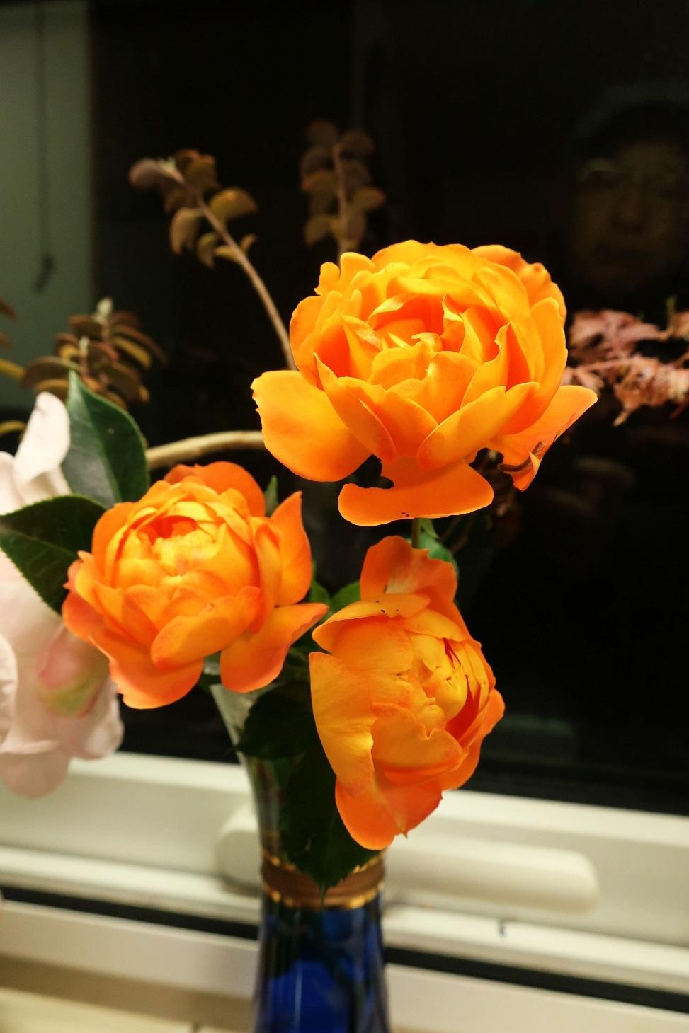 ハニーキャラメル ~庭の秋薔薇~_a0107574_19384647.jpg