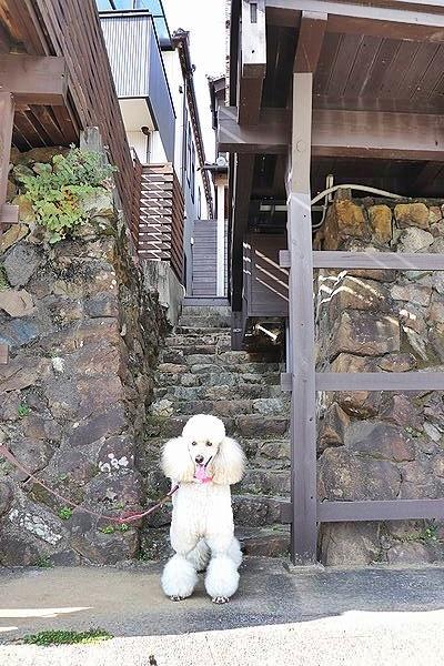 念願の「浜与」さんのしらす丼【旅行9】_b0111376_17511638.jpg