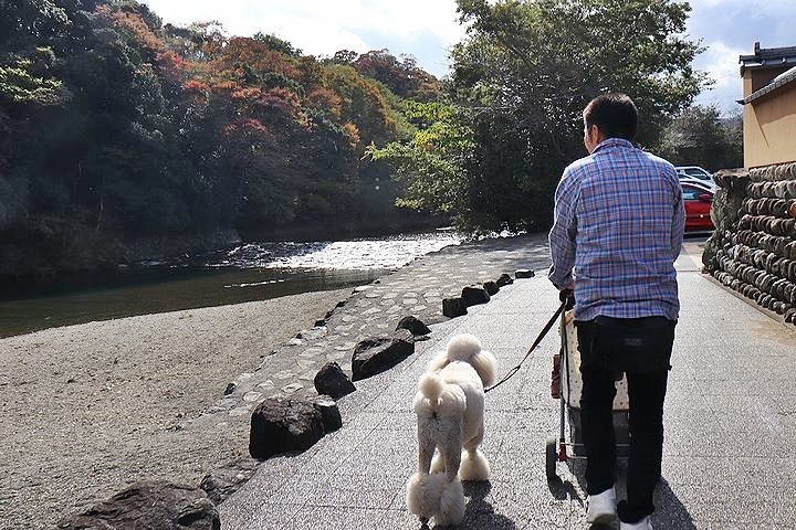 念願の「浜与」さんのしらす丼【旅行9】_b0111376_17512750.jpg