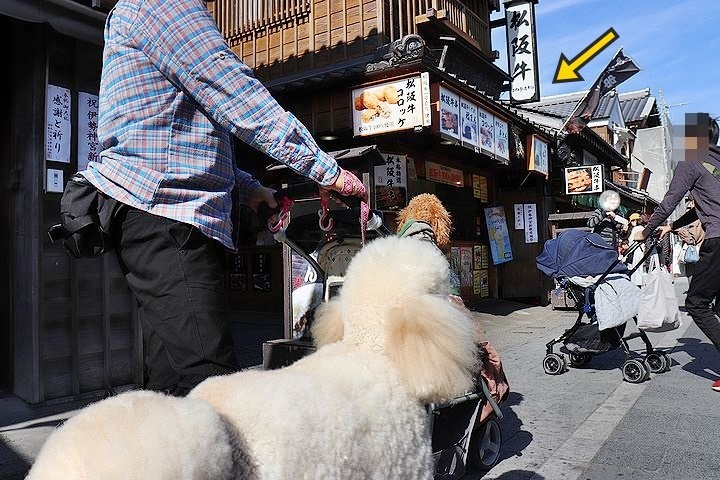 念願の「浜与」さんのしらす丼【旅行9】_b0111376_18024161.jpg