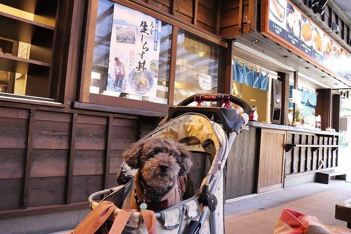 念願の「浜与」さんのしらす丼【旅行9】_b0111376_18102602.jpg