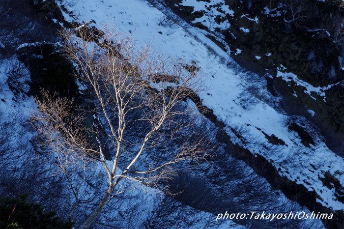 初冬の燕_f0361287_17350674.jpg