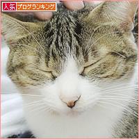 差をつける猫_a0389088_05244218.jpg