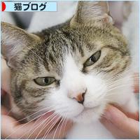 差をつける猫_a0389088_05244294.jpg