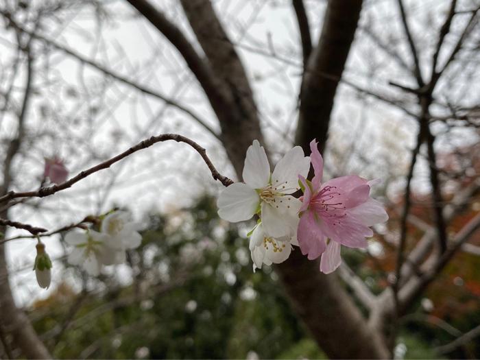 熱田神宮から名古屋駅周辺、観て食べて、地下街うろうろ、楽しんできました。_b0175688_20552080.jpg