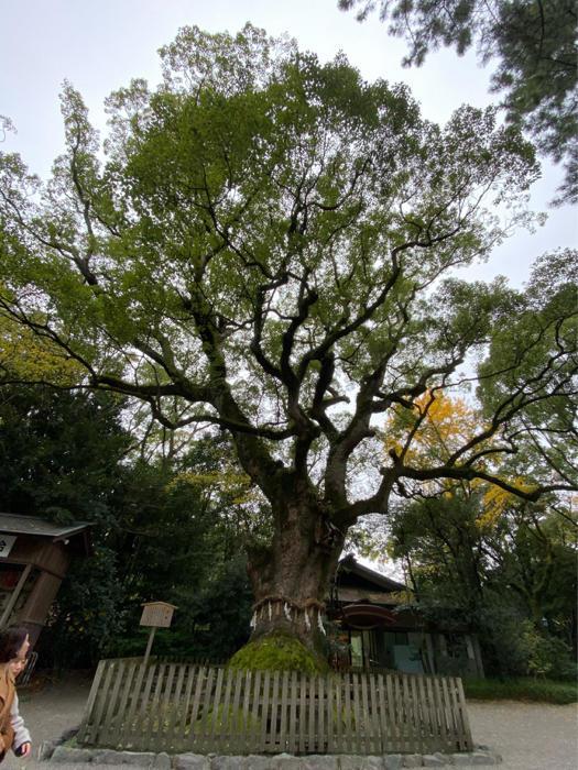 熱田神宮から名古屋駅周辺、観て食べて、地下街うろうろ、楽しんできました。_b0175688_20555059.jpg