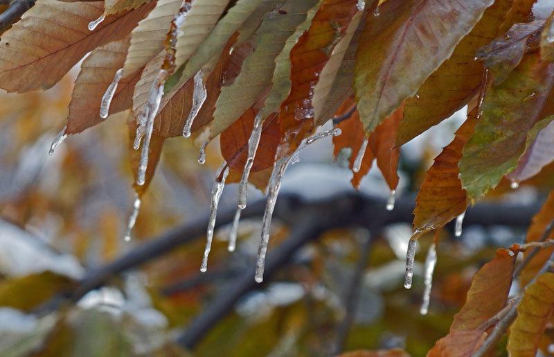 寒い朝_d0162994_08303459.jpg