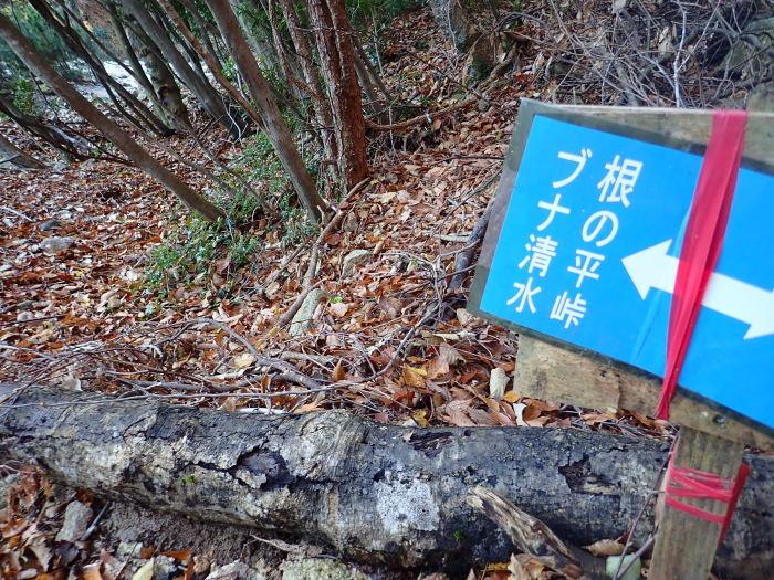 登山(ブナ清水~ハライド)  からの~朝明キャンプ!_a0049296_18590519.jpg