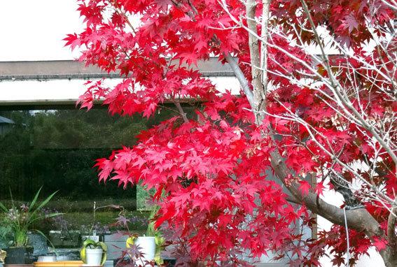 スロー紅葉の榊原温泉_b0145296_13025935.jpg