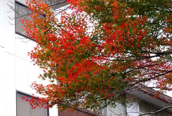スロー紅葉の榊原温泉_b0145296_13030075.jpg