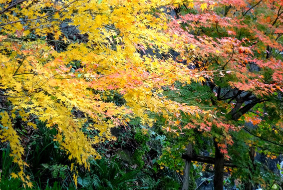 スロー紅葉の榊原温泉_b0145296_13030278.jpg