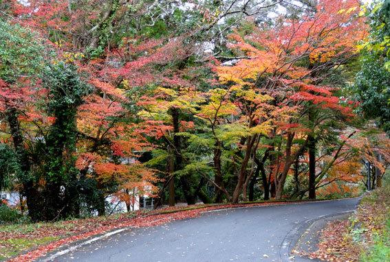 スロー紅葉の榊原温泉_b0145296_13031447.jpg