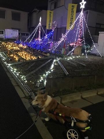 12月の夜は賑やか♪_f0242002_13100215.jpg
