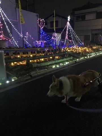 12月の夜は賑やか♪_f0242002_13101718.jpg
