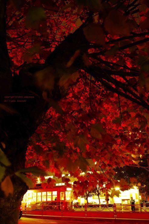 夜の灯りに照らされ_d0309612_00052090.jpg