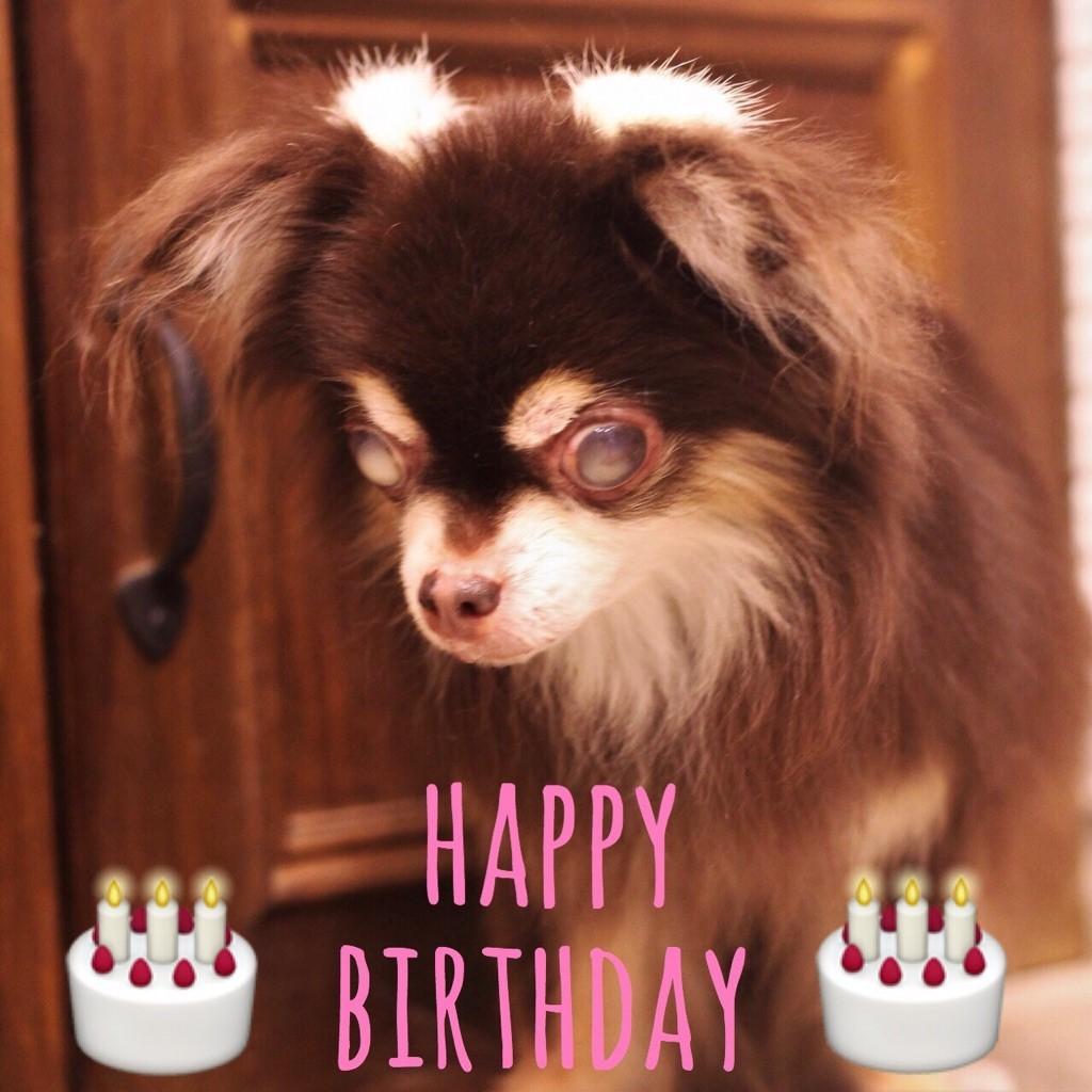 ☆ Happy Birthday ・ マルちゃん ☆_d0060413_15310382.jpg