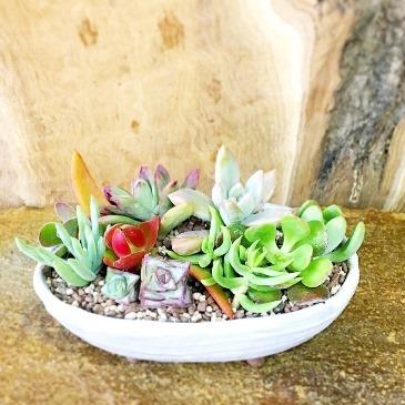 12月 植物ワークショップご案内_d0263815_15430272.jpg