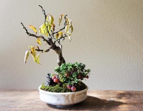 12月 植物ワークショップご案内_d0263815_16072460.jpg