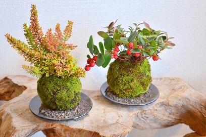 12月 植物ワークショップご案内_d0263815_16112827.jpg