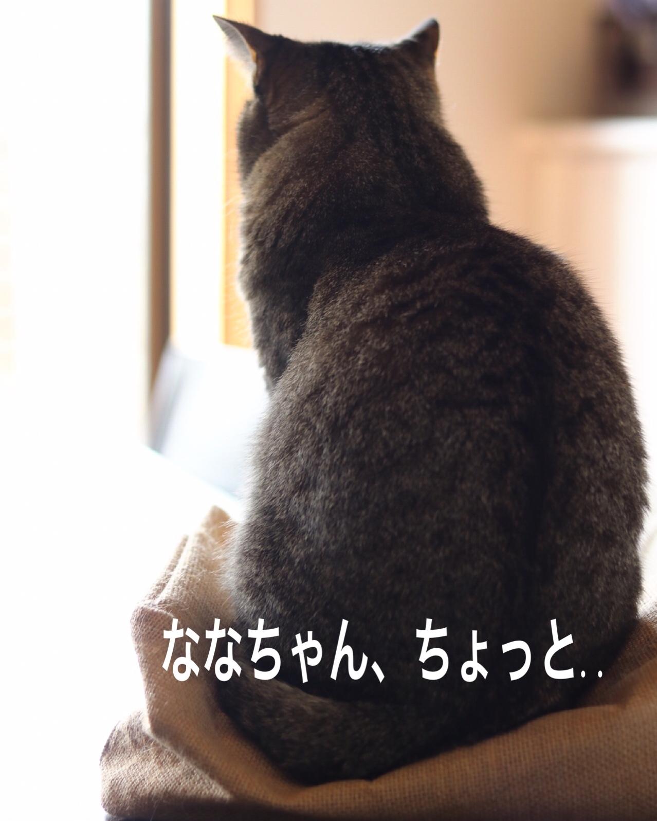 にゃんこ劇場「猫耳東風!」_c0366722_12223905.jpeg