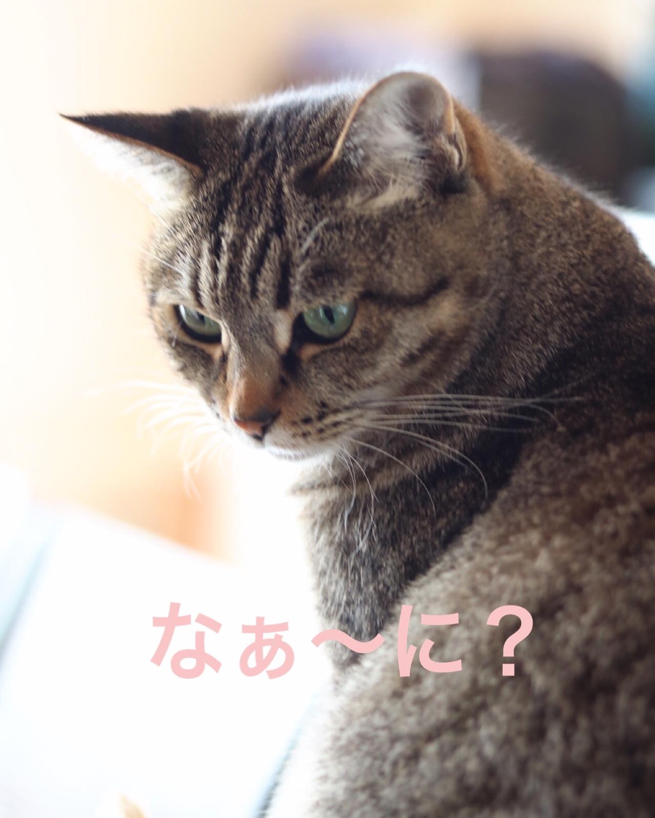 にゃんこ劇場「猫耳東風!」_c0366722_12225260.jpeg