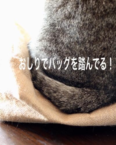 にゃんこ劇場「猫耳東風!」_c0366722_12230811.jpeg