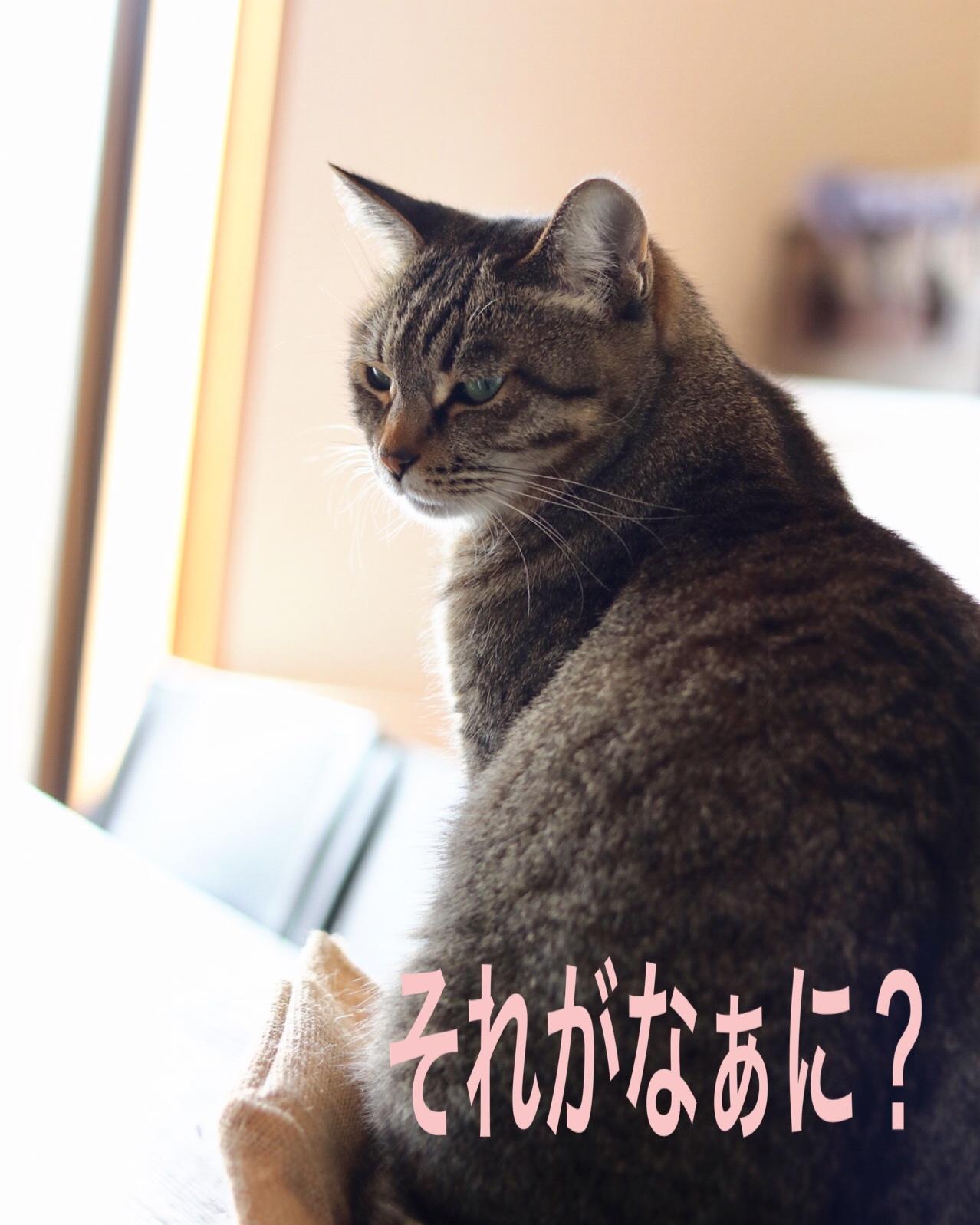 にゃんこ劇場「猫耳東風!」_c0366722_12232949.jpeg