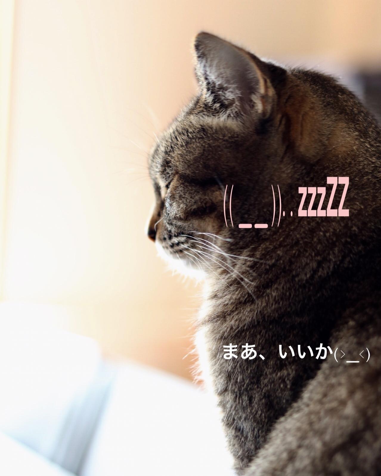 にゃんこ劇場「猫耳東風!」_c0366722_12234259.jpeg