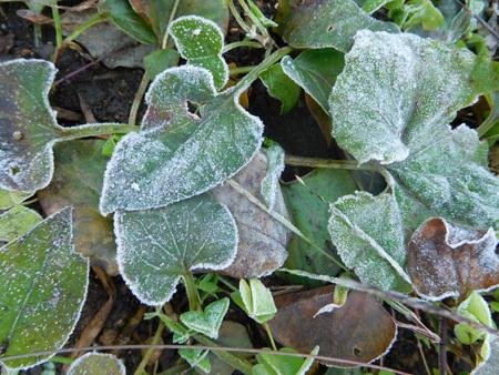 寒~い冬の朝がやってきた_e0097534_18170695.jpg