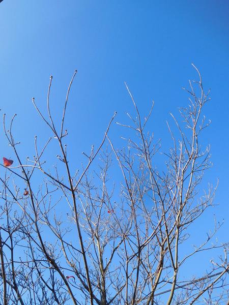 寒~い冬の朝がやってきた_e0097534_18234441.jpg