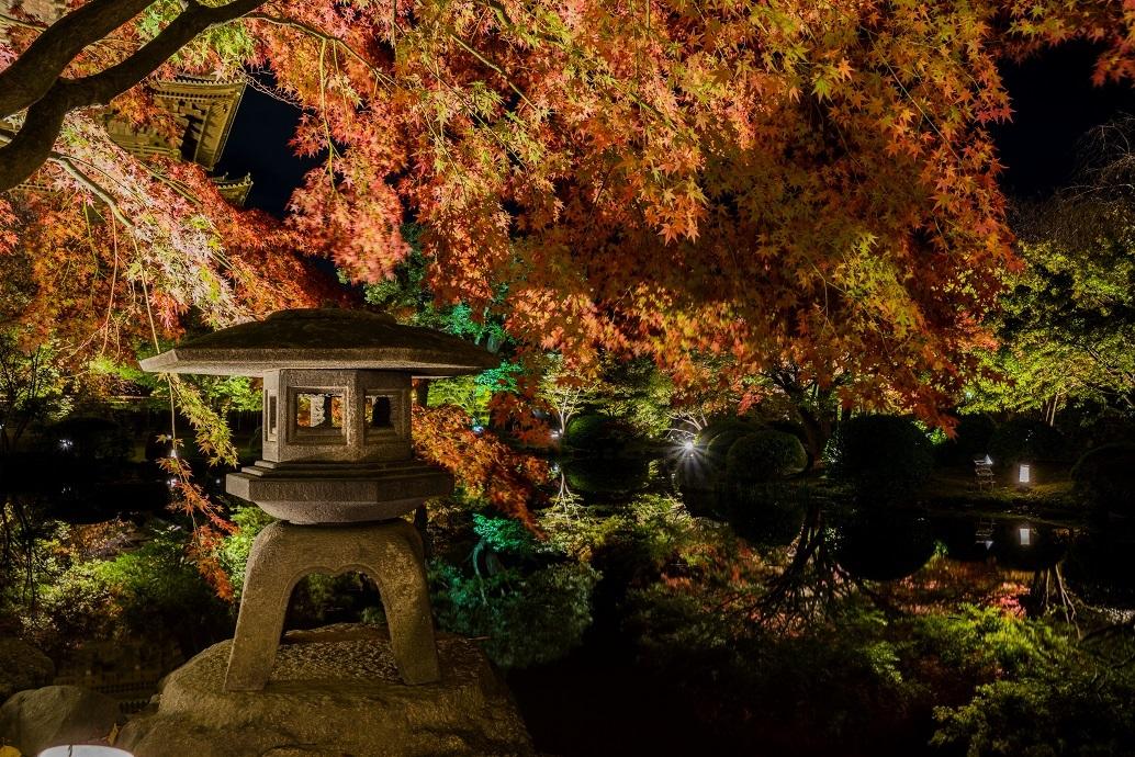 2019京都紅葉~東寺ライトアップ_e0363038_10282395.jpg